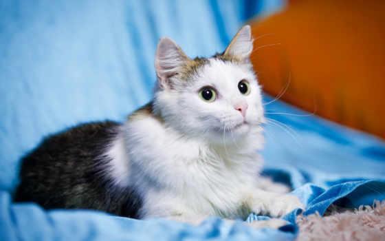 kucing, экран, замок, yang, you, suka, lucu, iphone,