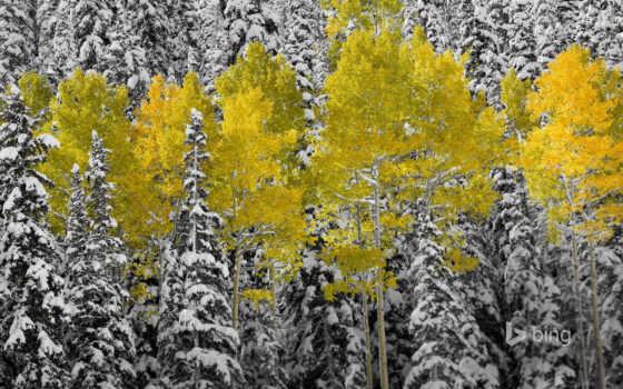 aspen, дерево, осень, гора, colorado, astronel, дневник, пасть, san, листва, fore