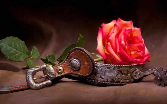 днем, gift, bouquet, рождением, цветы, шпора, розы,