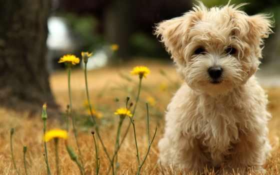 cute, puppy
