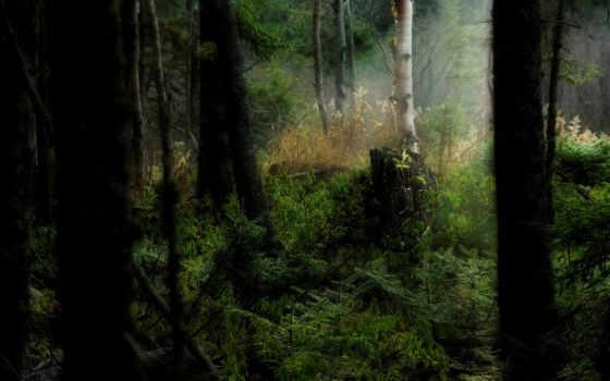 лес, dark, разрешениях