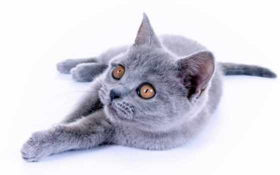 коты, zhivotnye