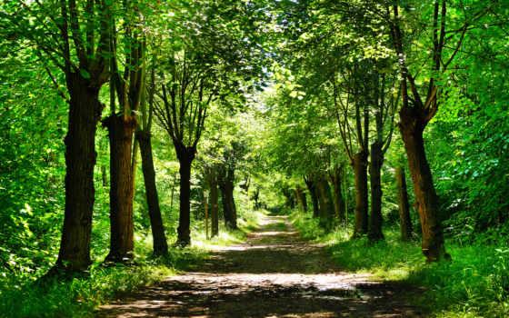 деревя, природа, дорога