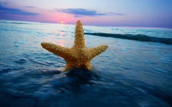 красавица, мира, star, морская, льв, spoki, природа, ocean, горизонт, море,