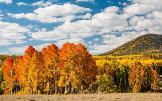 осень, горы, лес, trees, природа, oblaka, листва, желтые, страница,