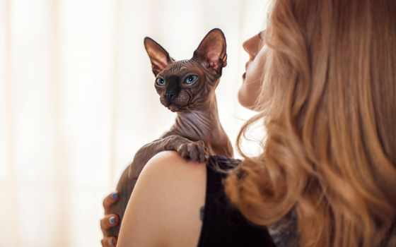 сфинкс, кот, девушка, кошки, породы, epilage,