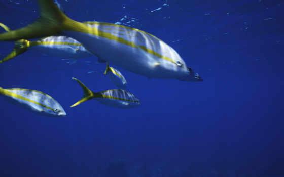 fish, water, тоби, yellow, white, this,