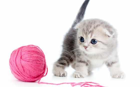 мяч, нитки, кот, котенок, spicy, вязание, white, ниток, будет,