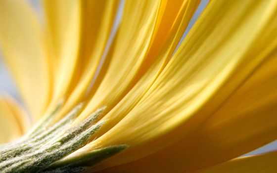 cvety, color, фото, букет, красивый, яркий, роза, картинка, природа