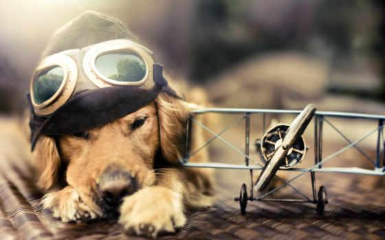plane, собака, point, пилот, шапка, коллекция