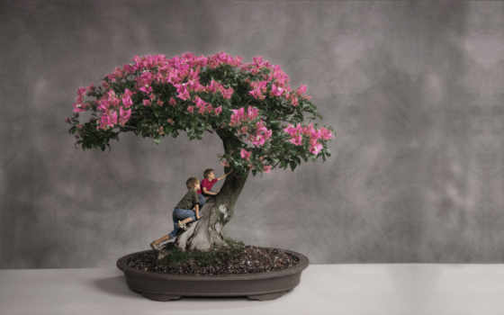 bonsai, дерево, япония