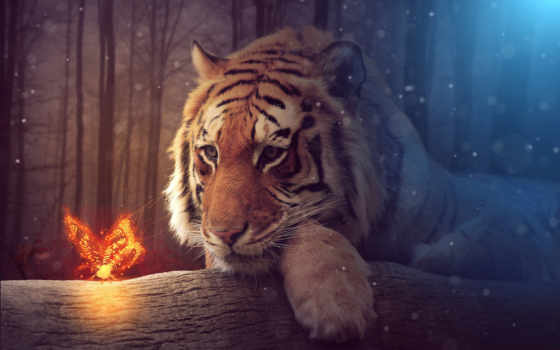 тигр, бабочка, zhivotnye, one, click, взгляд,