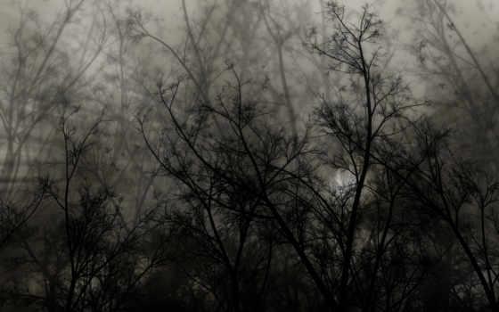 лес, природа, dark, summer, цветы, chevrolet, peugeot, zhivotnye,