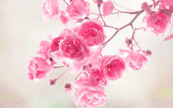 цветы, flowers, desktop Фон № 149183 разрешение 1920x1200