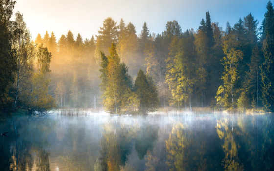 lohi, lauri, лес, природа, финляндия, рассвет, осень, озеро,