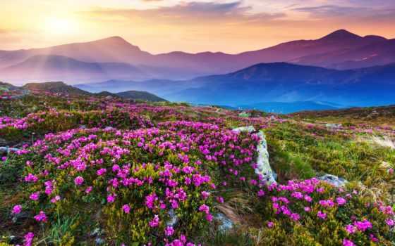 поле, природа, фотообои, flowers, cvety, mountains, гора, sunlight, пейзажи -, горы, небо,
