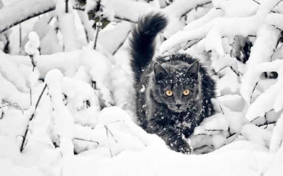 winter, снег, кот