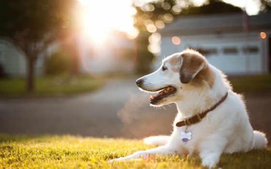 собака, cute, free, images, щенок, dogs, best,