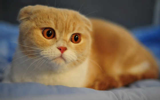 кот, cats, морды, windows, но, red,