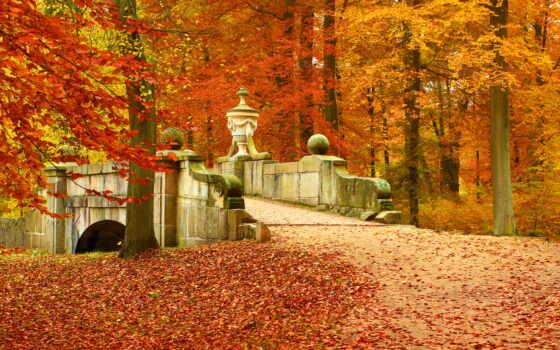 осень, природа, landscape, лес, мост, дерево