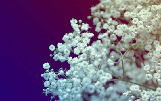цветы, букет, white, blue, color, small, makryi, красивый, оригинал, добавить, yellow