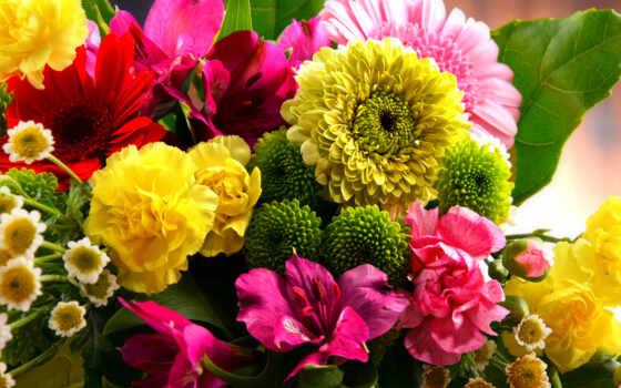 день, монитор, june, белгородский, nobelevskii, цветы
