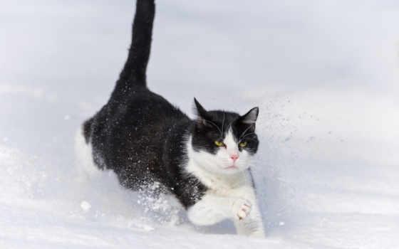 кот, бежит, снег, winter, jaguar, drift, ctambako,