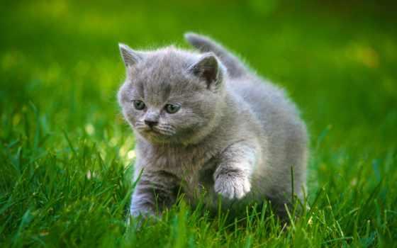 zhivotnye, котята, заставки