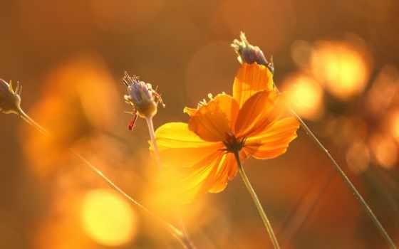 cvety, sun, цветы, ray,