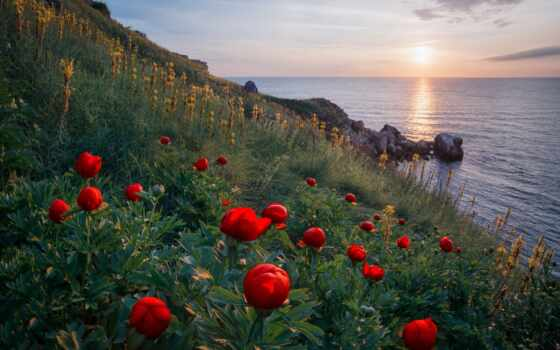 flowers, cvety, природа, ocean, море, берег, rashkovski, příroda, emil,
