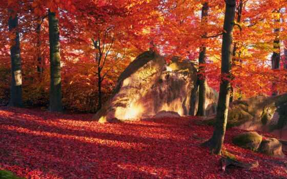 дерево, природа, dori, pachet, осень, fiecare, лист, suprize, cadourus, dimensiune, краска