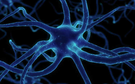 нейрон, сеть