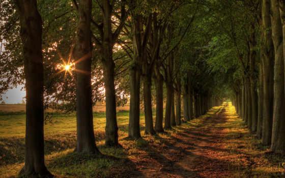 деревья, дорога
