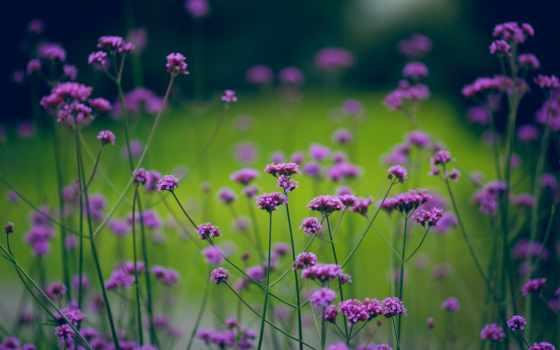 природа, цветы, зелёный