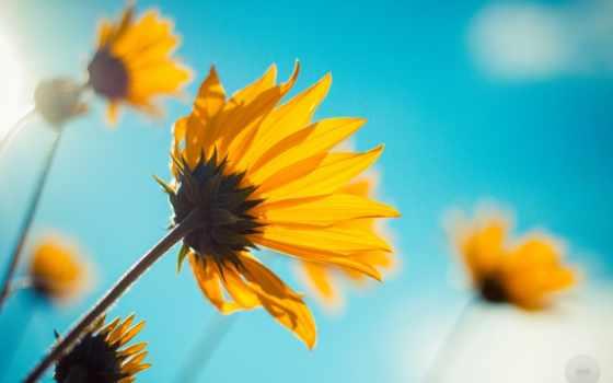 счастье, небо, sunshine, blue, цветы, страница,