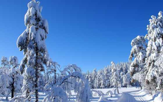 коллекция, лес, winter, фото, user, смотреть, природа
