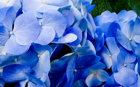 flowers, tutfon