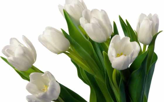 тюльпаны, цветы Фон № 70875 разрешение 1920x1200