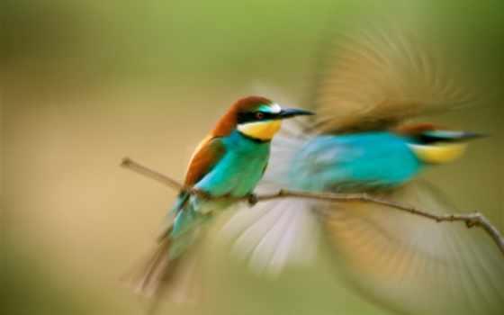 птица на вертке