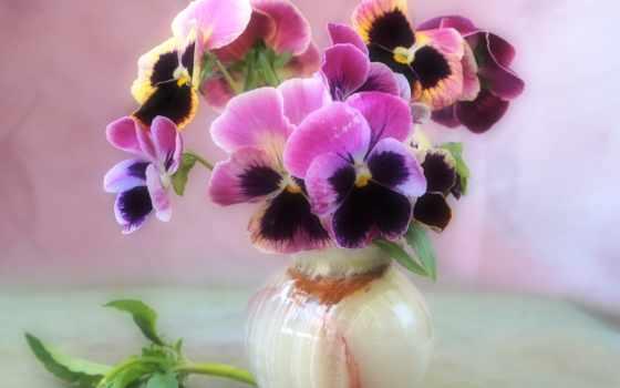 цветы, нежность, ваза, букет, еще, фиалки,