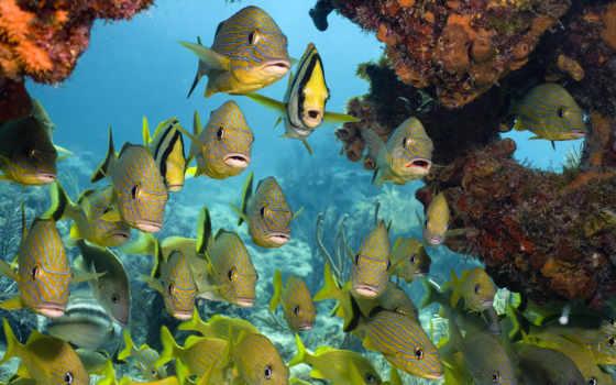 рыбки, море, underwater, world, кораллы, рыбы, тропические,