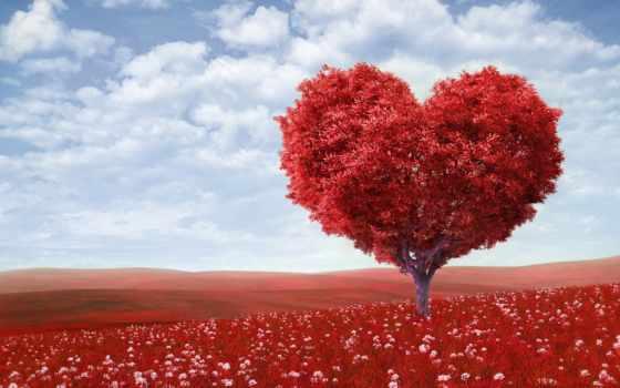 árbol, corazón, arbol, rojo, corazon, pantalla, forma, fondos, las, mejores,