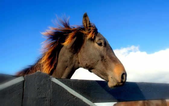 лошадь, грива, голова, морда, iphone,