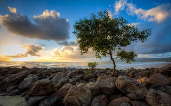 дерево, море, берегу, небо, камни, oblaka, пащей,