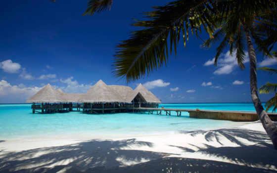 остров, мальдив, borabor, бунгало, palm, море, hotel, villa, пляж, изображение, пожалуйста