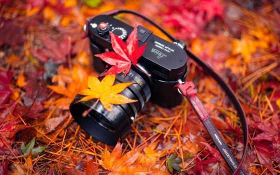 фотоаппарат, пасть, листья, осень, люди, оригинал, plants