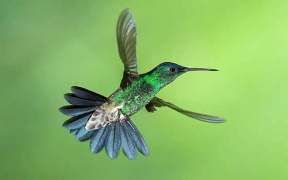коллекция, колибри, природа, птица, другой