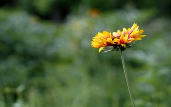 природа, трава Фон № 2163 разрешение 1920x1080