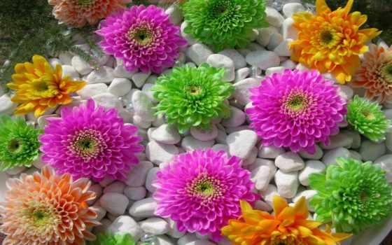 цветы, красивые, красивых