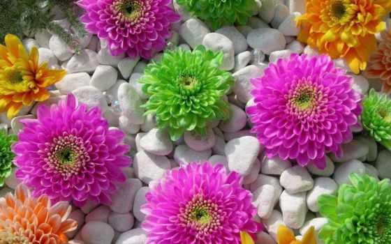 цветы, пост, страница
